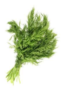 fennel-fenouil